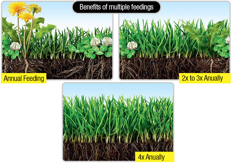 How To Kill Weeds Not Grass Practical Advice To Killing Weeds