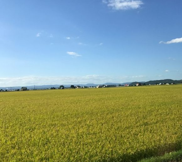 旭川の田園風景