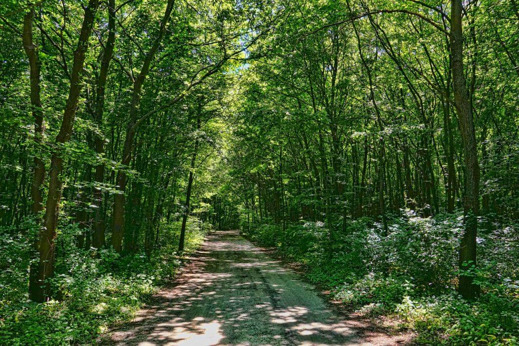 広葉樹林(ブナの木)