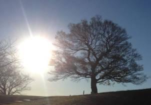 朝日を浴びるシンボルツリー