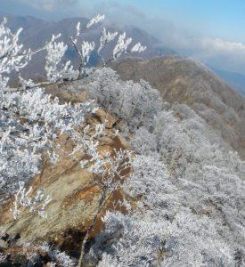 霧氷を楽しみながら檜洞丸から犬越路方面へ下る
