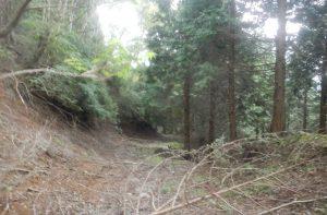 降り立った林道は自然に還りつつあった