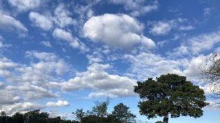 シンボルツリーと浮雲