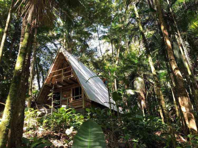 foto de cabana de madeira pré-fabricada em meio à floresta tropical