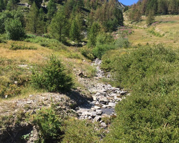 location chalet a vars claux - Location chalet de luxe - Chalet Ours Blanc Vars Alpes du Sud