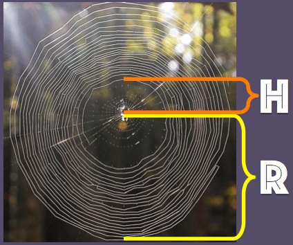 A spiderweb with radius $R$ and hole $H$