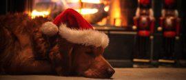 Chalkdust's Christmas conundrums