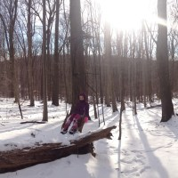 Winter Woods Trek