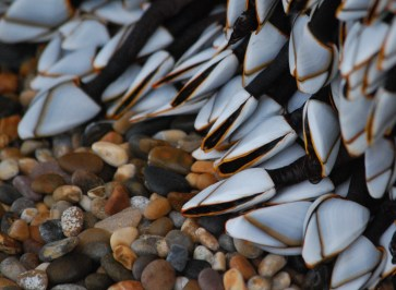 Mussels perhaps 2