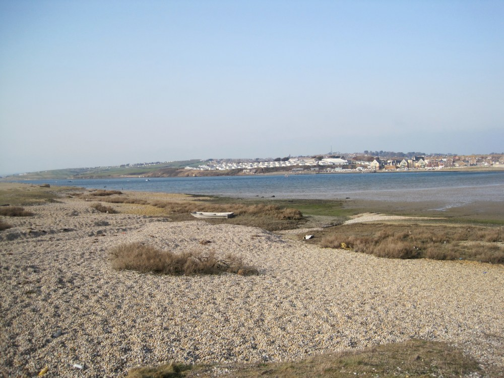 Chesil Hare (1/6)