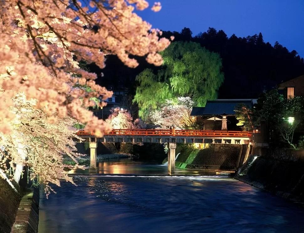 飛騨高山の中橋 夜桜