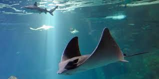 L'aquarium de Biarritz