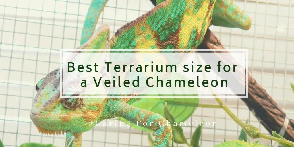 Best Terrarium size for a Veiled Chameleon