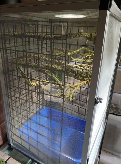 chameleon's cage