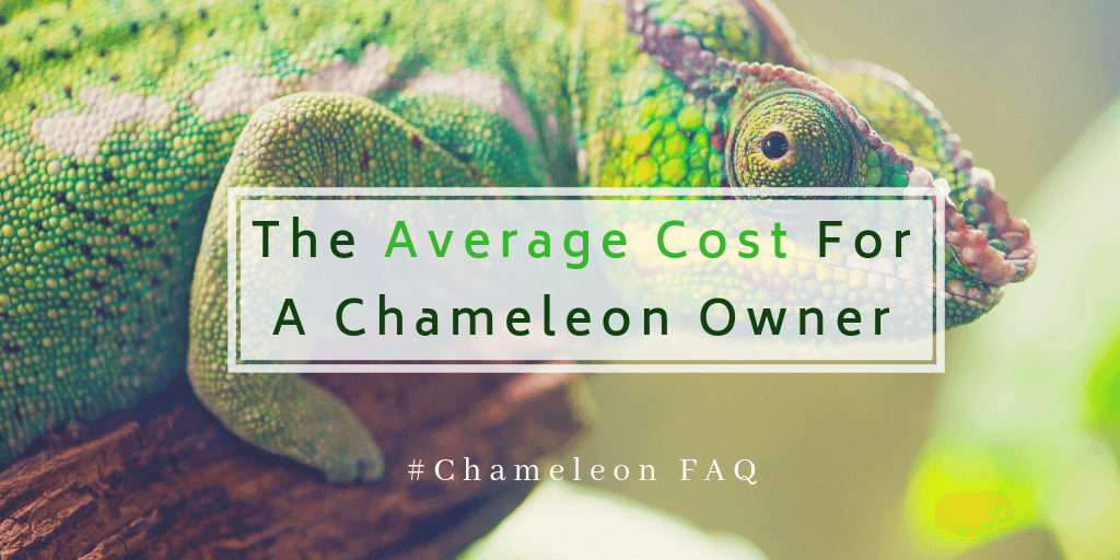 The Average Cost For A Chameleon Owner