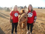 Camels in Morrocco
