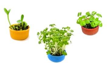 Bottle cap planters with basil sprouts Via: Inhabitat.com