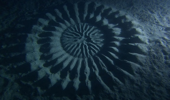 Underwater structure, Anami Oshima, Japan. Approx. 6 ft. (2m) in diameter. Photo: Yoji Ookata
