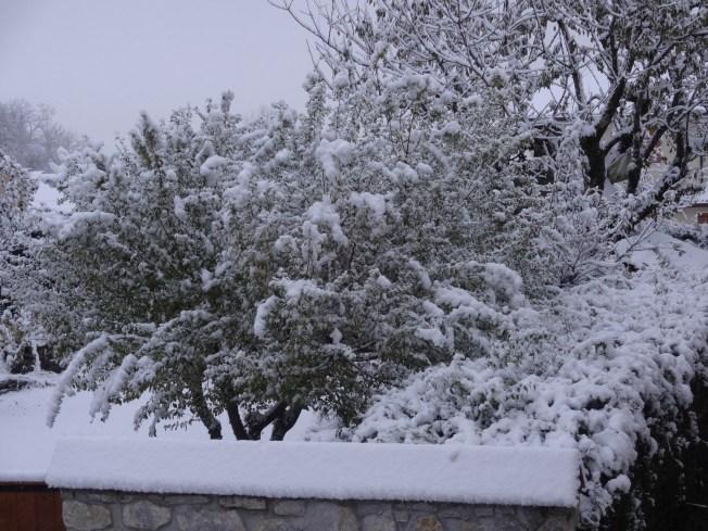 Early morning garden, first snow. Photo: PK Read