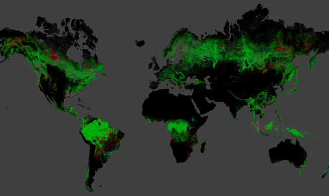 Global Forest Map The red areas indicate net forest loss. Click on the image for the interactive map. Source: Earth Engine Partners