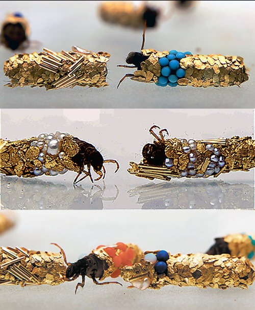 Caddisfly cocoons, made in water tanks filled with gold flakes, semi-precious and precious stones.  Credit: Hubert Duprat