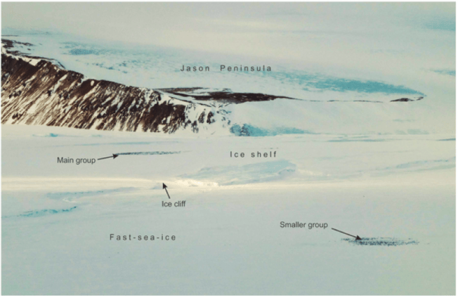Emperor Penguins on the edge of the Larsen Ice Shelf near the Jason Peninsula late in the breeding season. Note the ice cliff which is probably an insurmountable barrier to the adult emperor penguins. No evident route to the colony was determined from the images. Caption/Photo: Fretwell et al. / Ian Potten