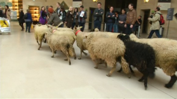 Herd of sheep in the Louvre. Photo: antenna
