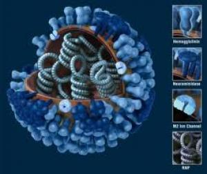 3D image of a rhinovirus Source: Bio21 Institute