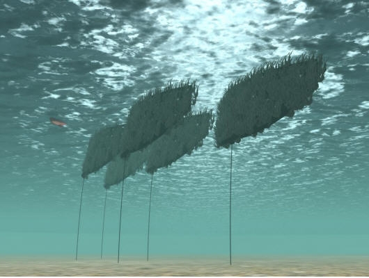 Mass Seaweed Carriers Source: SES