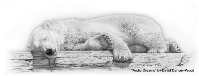 Arctic Dreams Artist: David Dancy-Wood via Wildlife Sketches