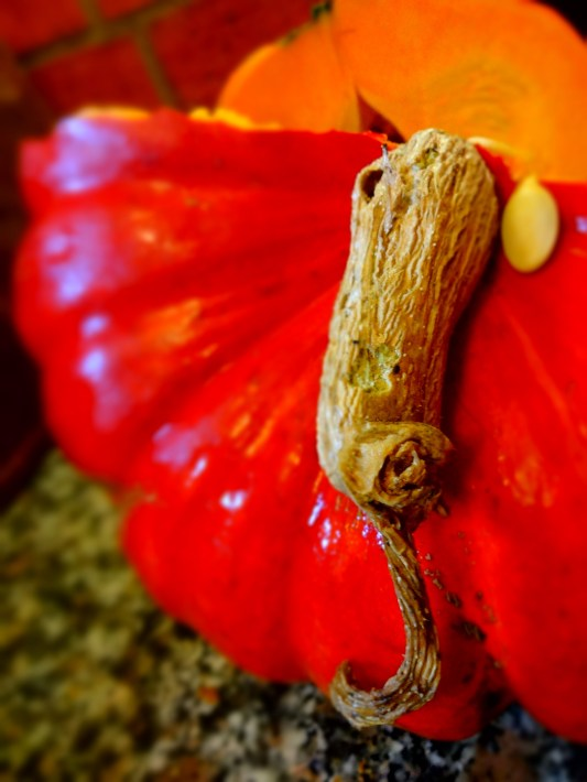 Pumpkin from the garden. Photo: PK Read