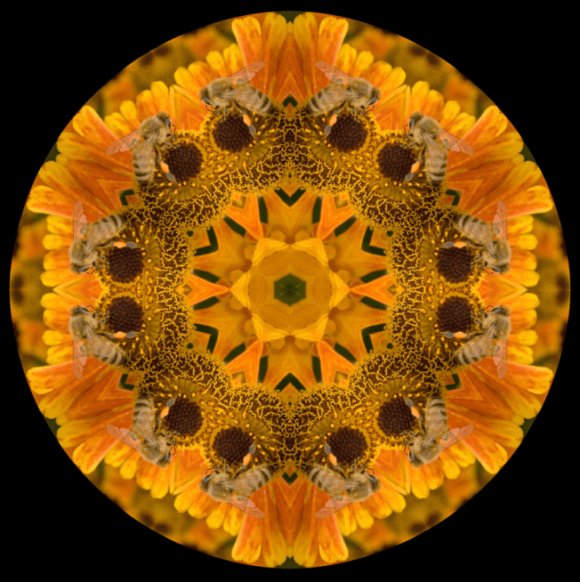 Mandala Insect Art Series - Honey bee 2852 Artist: Susan Cleaver