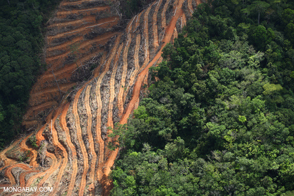 Deforestation in Borneo. Photo: Rhett Butler/Mongabay