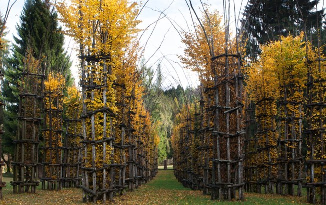 As the hornbeam trees within the columns grow and mature, the original support structures will age and fall away, leaving a small forest in the shape of a cathedral. Image: Arte Sella