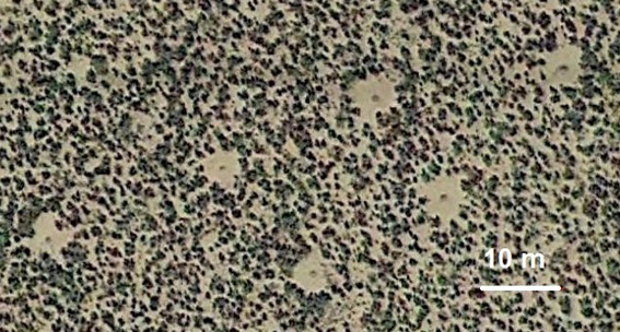 Discs in patterned vegetation (Courtesy Google Earth, coordinates: 36°14'55.07'' N, 113°05'05.22'' W). Source: A.C. Sparavigna