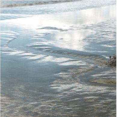 Tidal mud in Guadalcanal Mitigation Site. Photo: Sally Mack