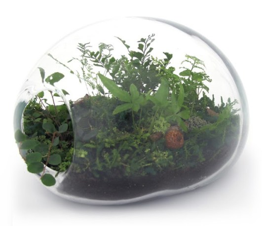 Jeffrey James terrarium. Image: Jeffrey James
