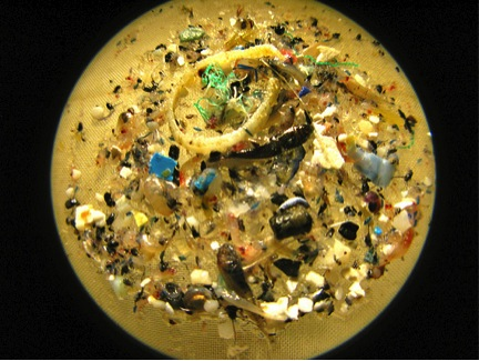 Microplastics. Photo: Puget Sound We Love You