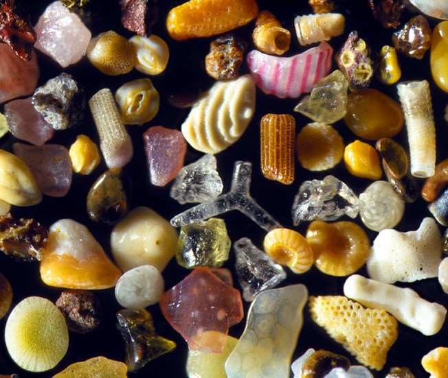 Hawaiian sand, magnified 300x. Photo: Gary Greenberg