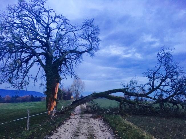 One of my favorite trees split down the middle last week. Photo: PKR