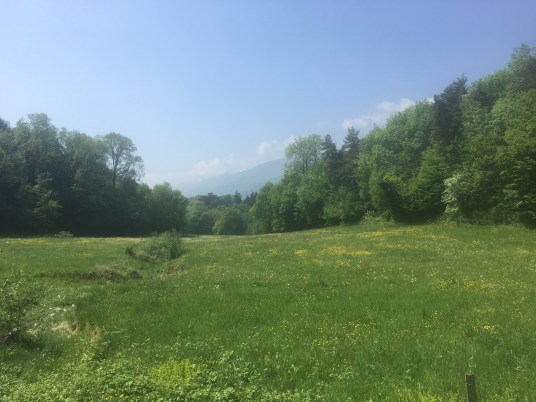 spring, pasture, running, green
