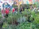 Un jardin potager urbain