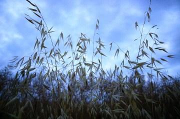 Summer Harvest Oatmeal