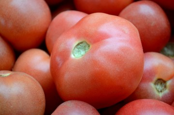 Bumper Crop Tomato Salad