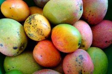 Mango Delight Smoothie