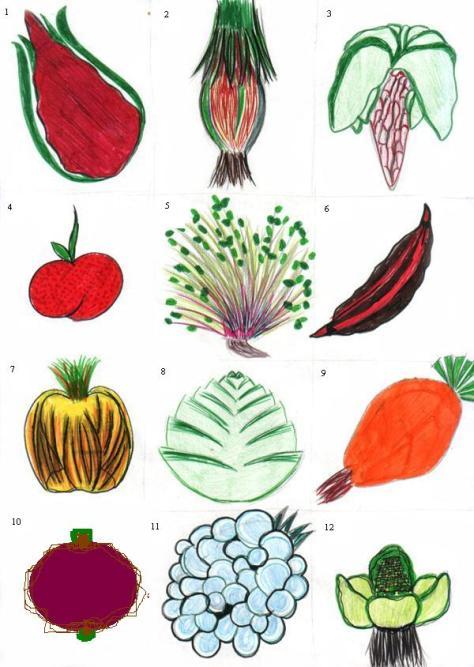 C_E_Fl_09_fruits_et_legumes1