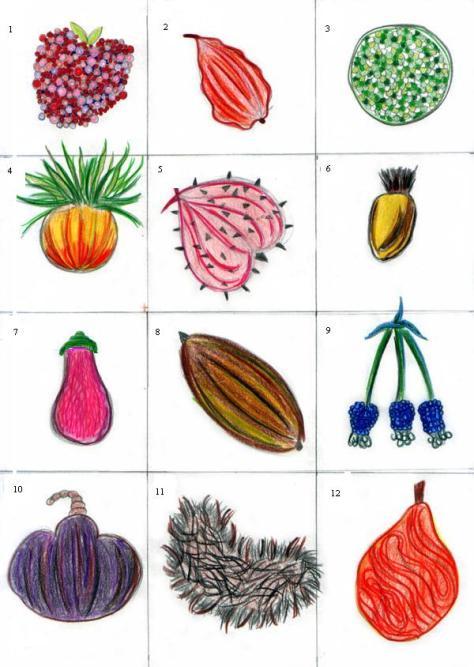 C_E_Fl_10_fruits_et_legumes2