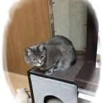 カラーBOXで猫の隠れ家を作る!その3立って爪とぎしたいにゃん!
