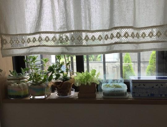 窓辺の植物たち