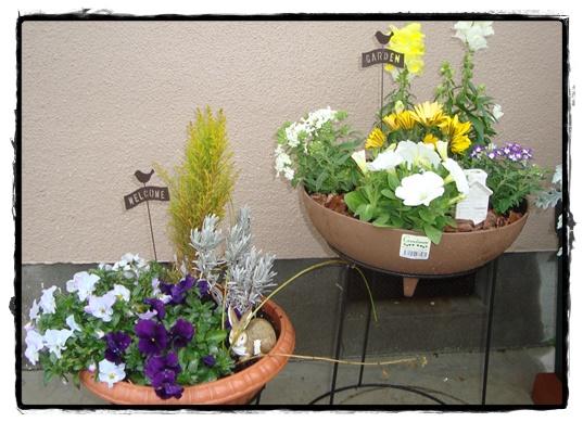 秋冬の寄せ植えと春の寄せ植え